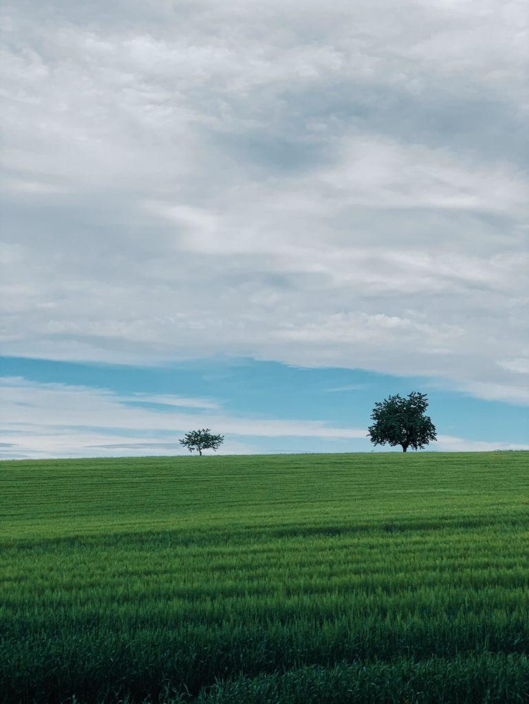Matthias Maier   Growing Wheat