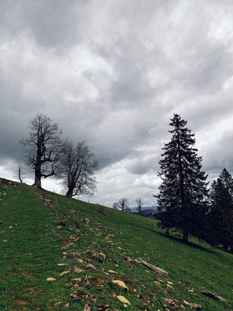 Matthias Maier   Old trees