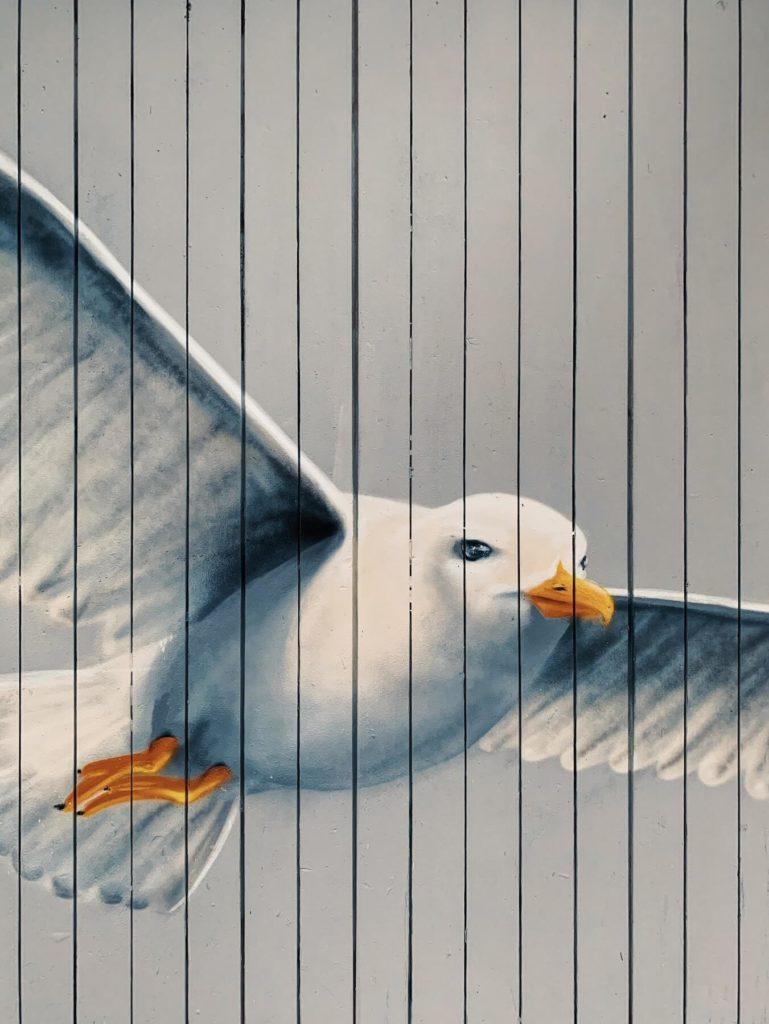 Matthias Maier | Seagull