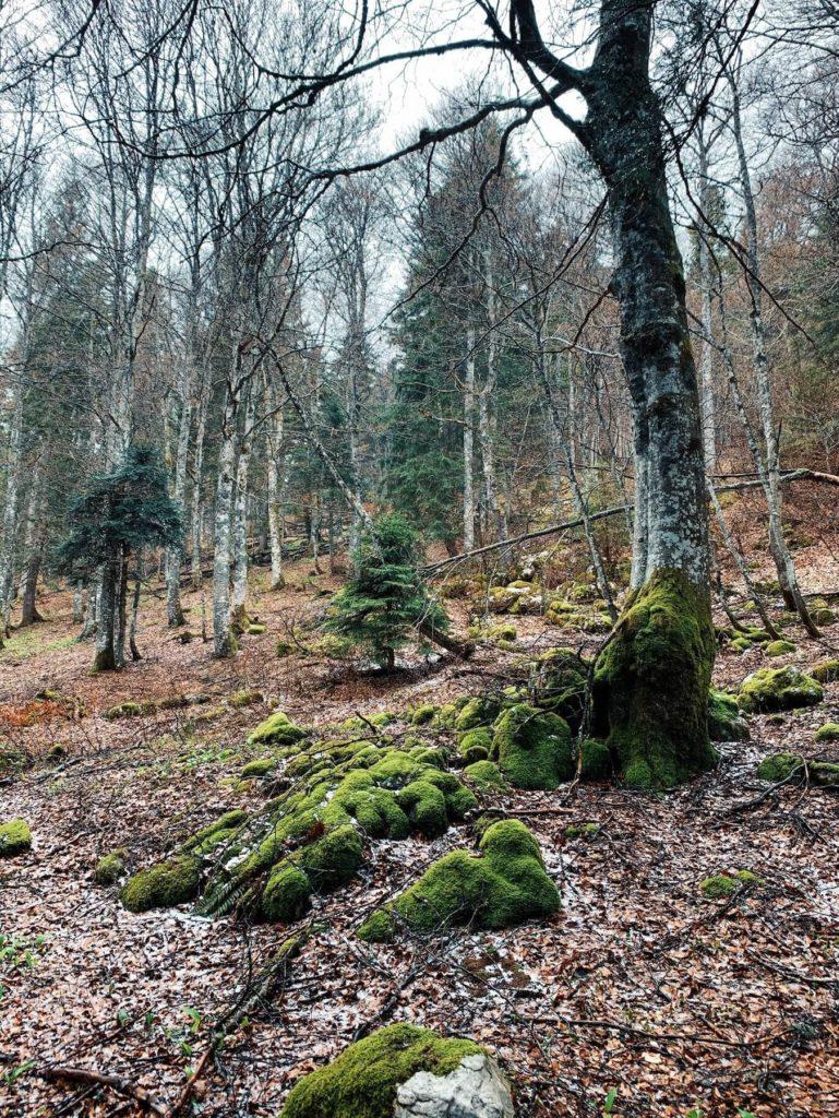 Matthias Maier | Virgin forest
