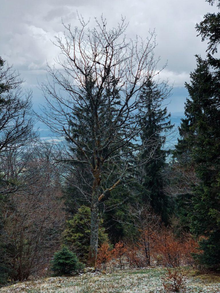 Matthias Maier   Virgin forest