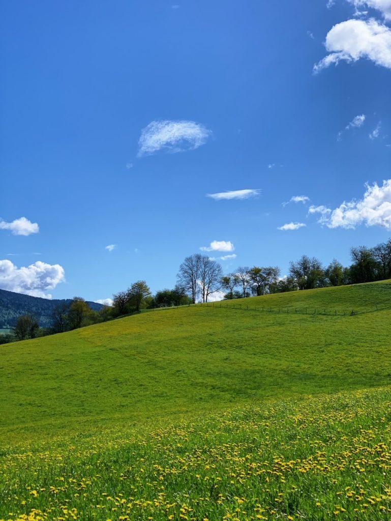 Matthias Maier | Landscape in spring