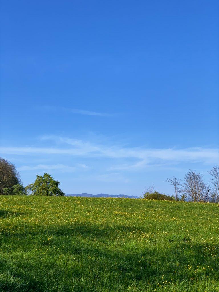 Matthias Maier   Spring meadow