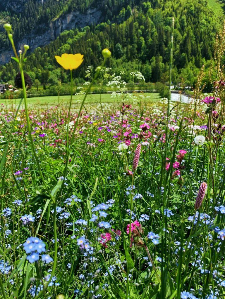 Matthias Maier | Flower Meadow