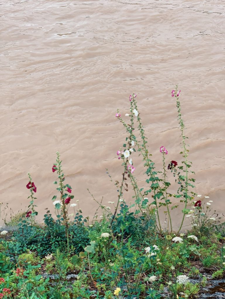 Matthias Maier   Flood flowers