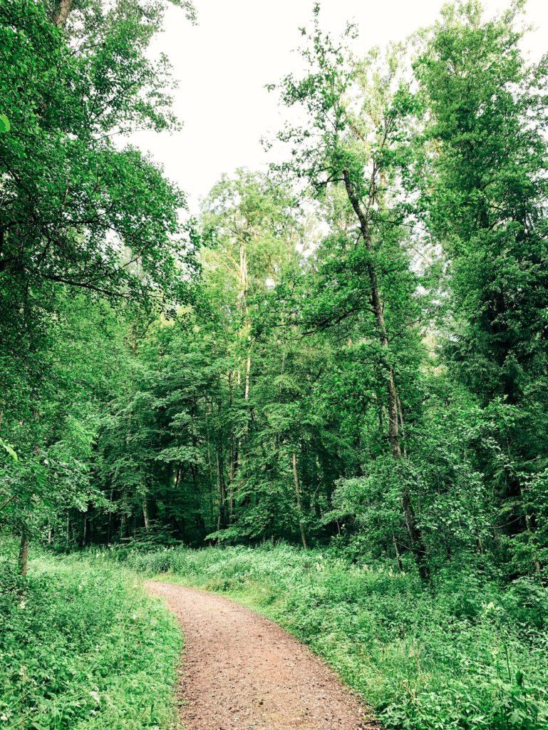 Matthias Maier   Rainforest