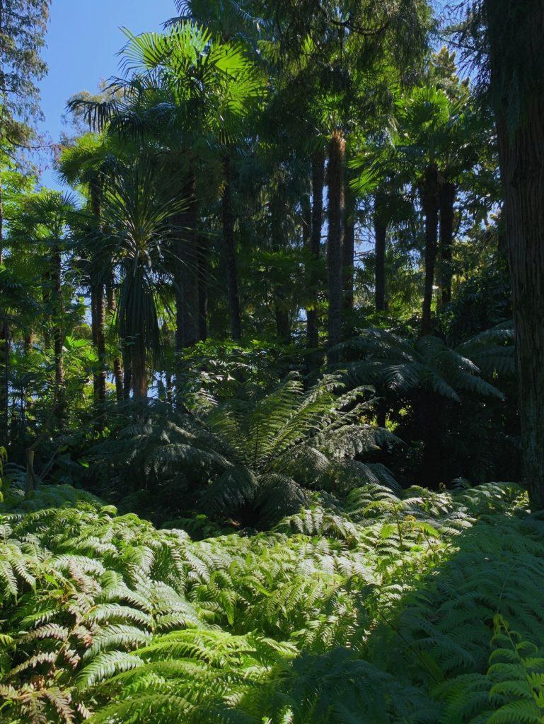 Matthias Maier | Fern forest