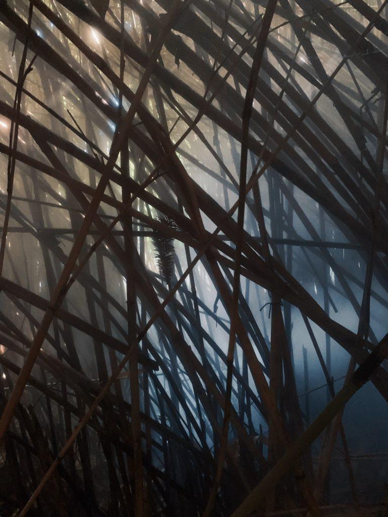 Matthias Maier   Bamboo cloud forest