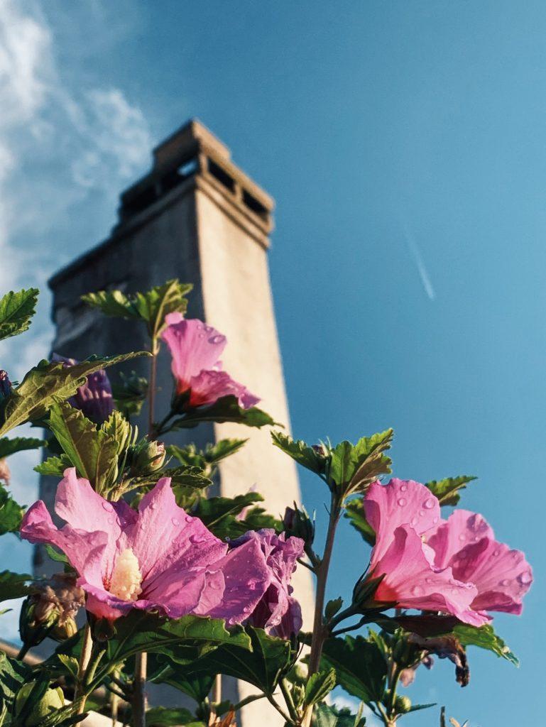 Matthias Maier | Rooftop Blossoms