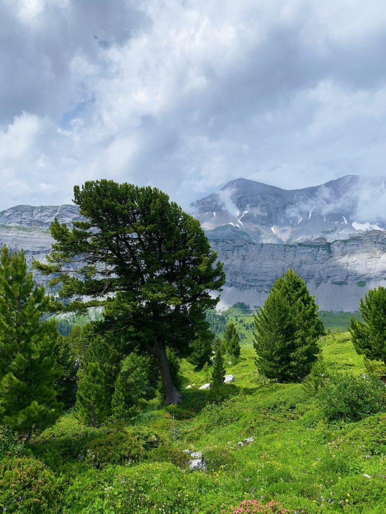 Matthias Maier   Alpine Vegetation