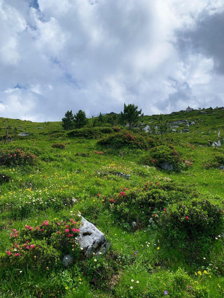 Matthias Maier | Alpine Vegetation