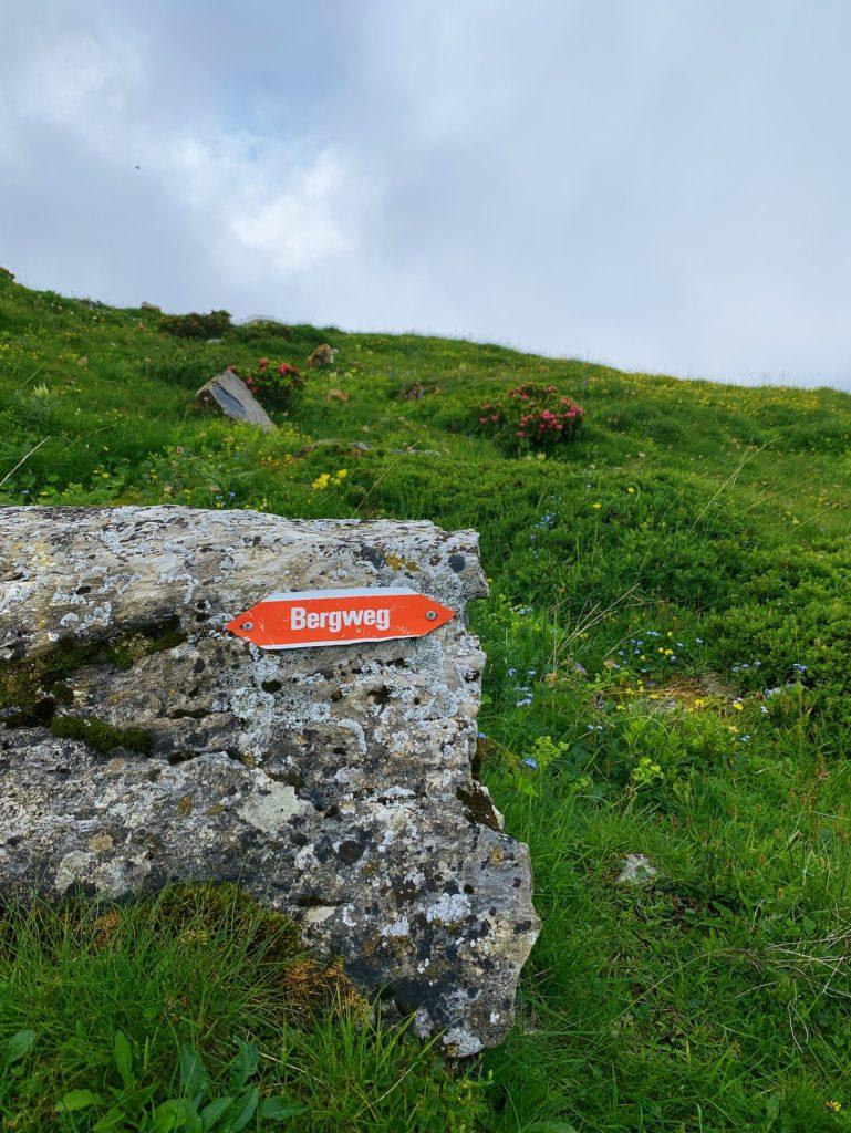 Matthias Maier   Mountain Trail