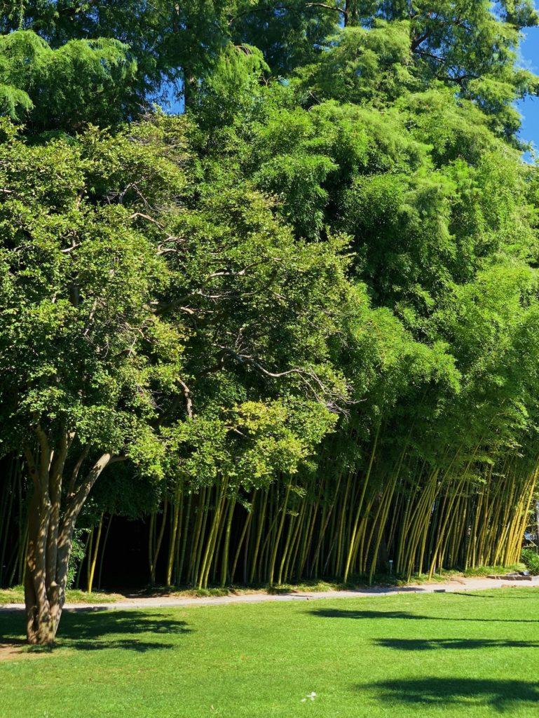 Matthias Maier | Bamboo forest