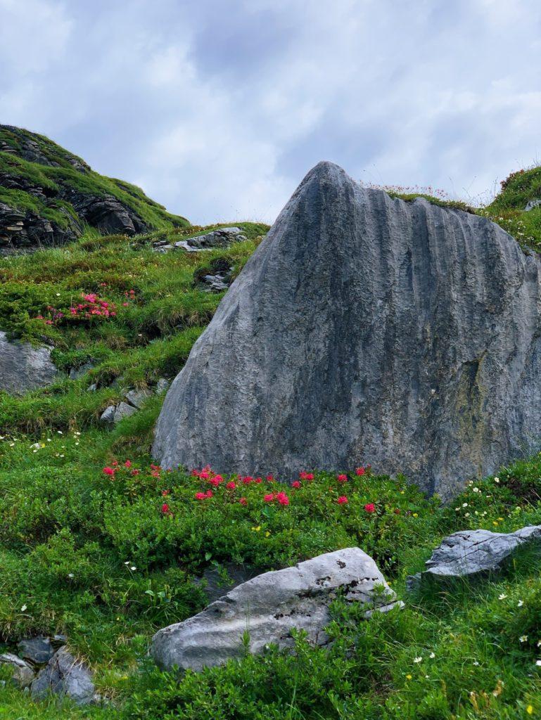 Matthias Maier   Alpenroses and stones