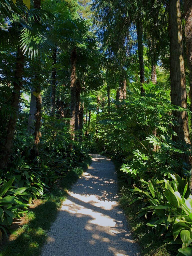 Matthias Maier | Palm forest