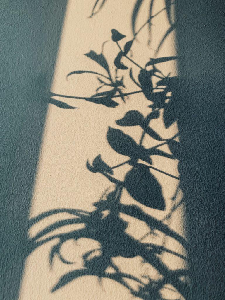 Matthias Maier | Bathroom Plants Shadow