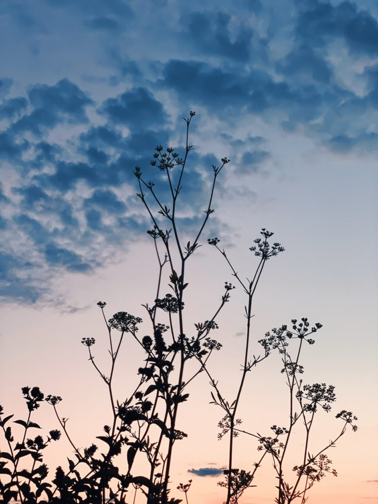 Matthias Maier   Peppermint and Parsley against the evening sky
